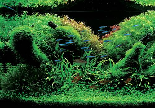 Aqua Forest Aquarium with Real Plants - ALL TECHNO BLOG - Technology ...